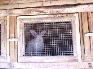 kandang kelinci